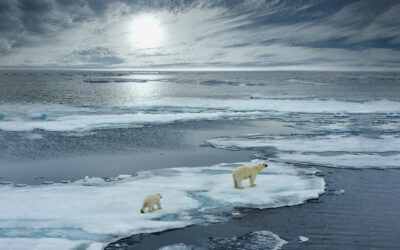 The Arctic – A Quick Look at Leading Organizations